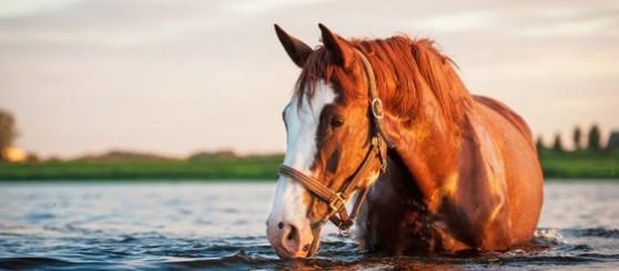 caballo.php