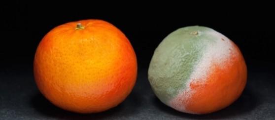Naranja-podrida
