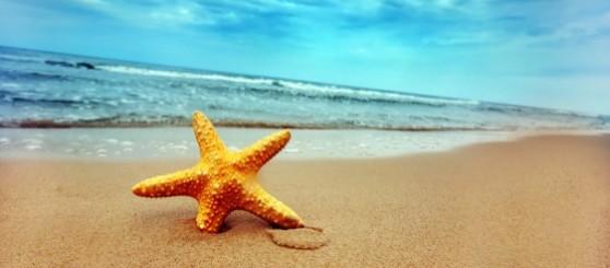 lone-starfish